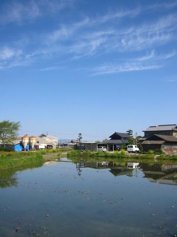 青い空とハス田