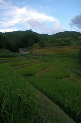 久留米木の棚田
