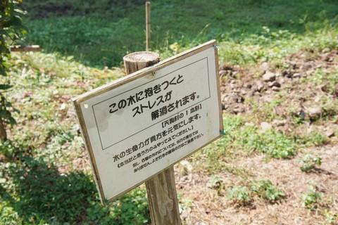 天狗村の一本杉