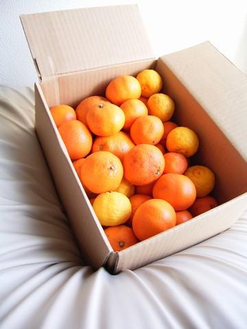 柑橘類一式
