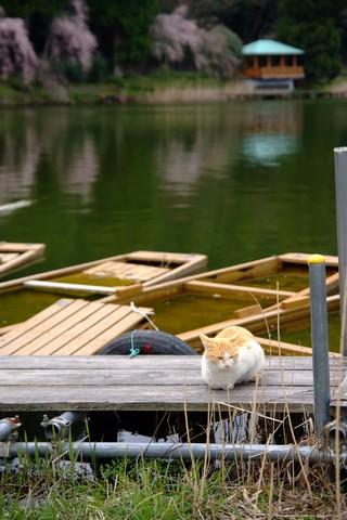 野守の池のネコ