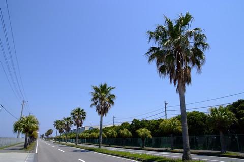 椰子の木通り