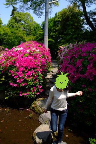 津島神社宝寿院のツツジ