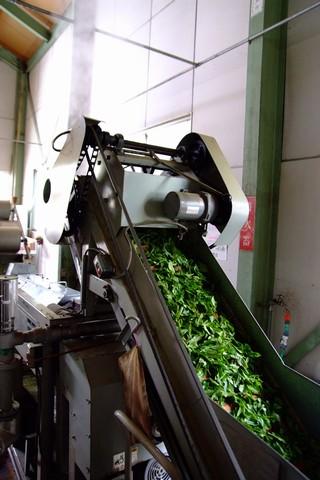 牧之原製茶