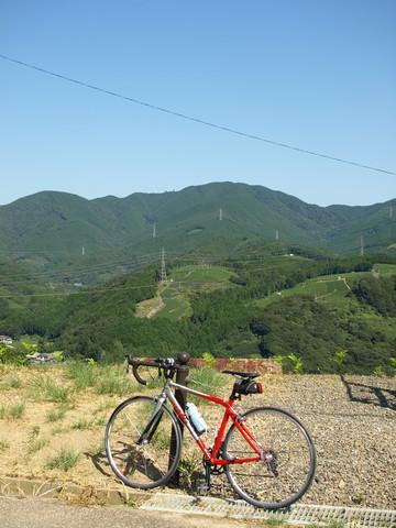 島田の茶畑