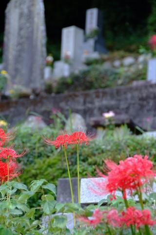 上倉沢の棚田と彼岸花