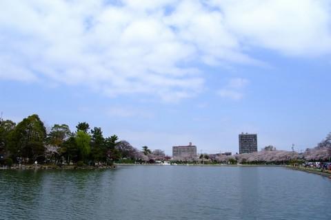 天王川公園の桜
