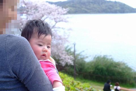 浜名湖SAの桜