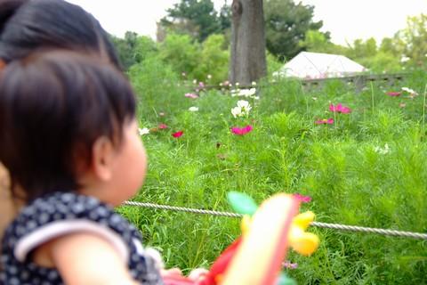 木曽三川公園・秋の花物語