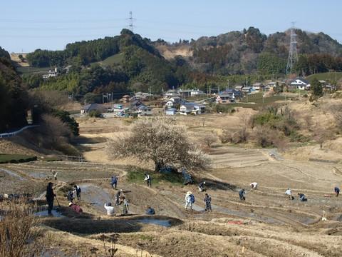 菊川・上倉沢の棚田