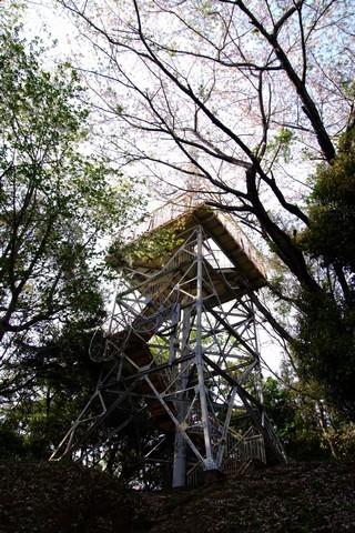 菊川公園の桜